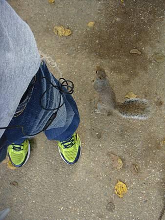 跟我玩耍的小松鼠