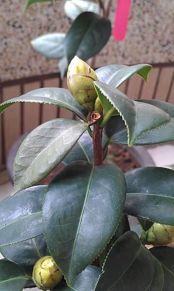 leafprob003.jpg