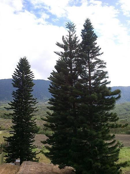 2011.12.17 池上富興社區的大樹