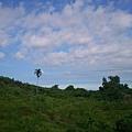 2012.7.8 台東山上的一棵檳榔樹