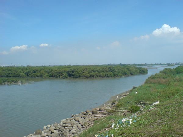 河中的小樹叢