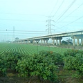 往崁頂農場的陸橋