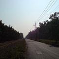 虎山路景色8