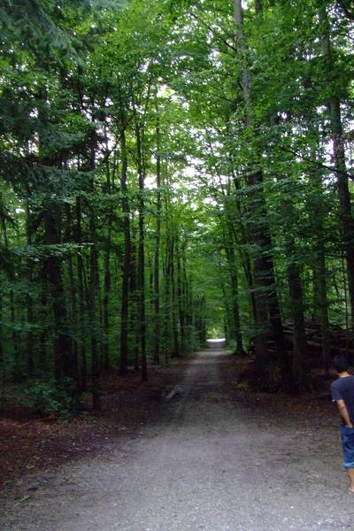深邃的林區小路