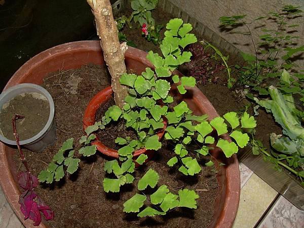 20121021今天跟昨天撿的植物 (34)