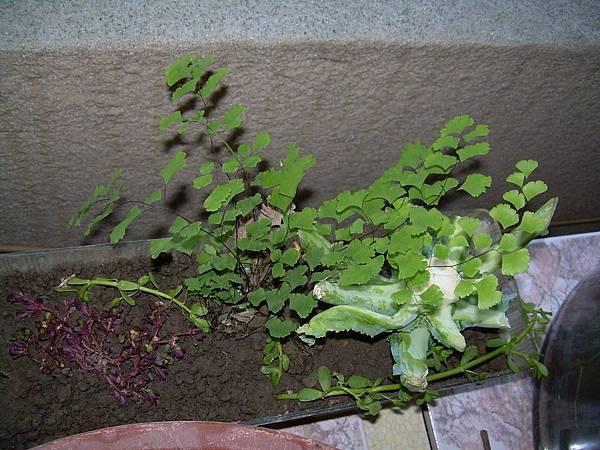 20121021今天跟昨天撿的植物 (35)