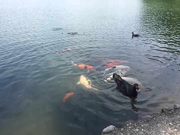 梅花湖3.jpg