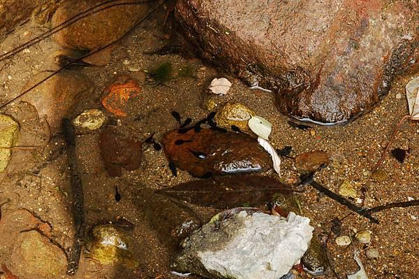 青蛙家族之蝌蚪
