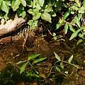 青蛙家族之青蛙