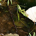 青蛙家族之青蛙蛋