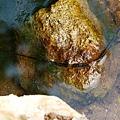 青蛙家族之青蛙蛋1