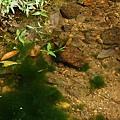 青蛙家族之青蛙蛋好多