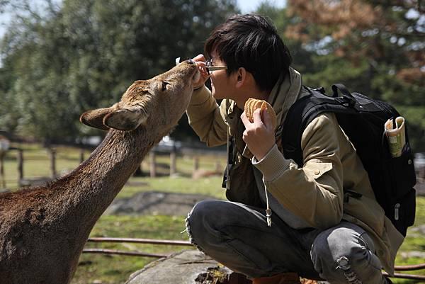 到奈良公園,跟小鹿親密接觸