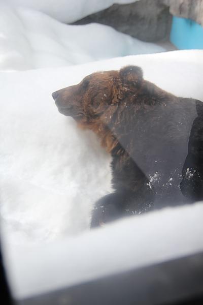 熊睡得超熟地