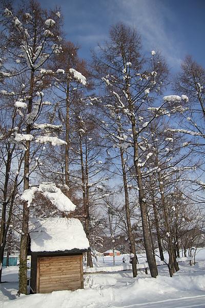 枯木上積點小雪球,怎麼看都不會膩的美景