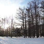 陽光灑在雪地上,光和影在樹枝間穿梭