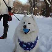 雪地裡的狗狗~* 超級可愛的,緊咬著球球