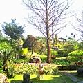 芯園的美麗花園.jpg