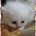 芯園的寶貝貓咪-李小寶.jpg