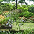 美麗的花園1.jpg