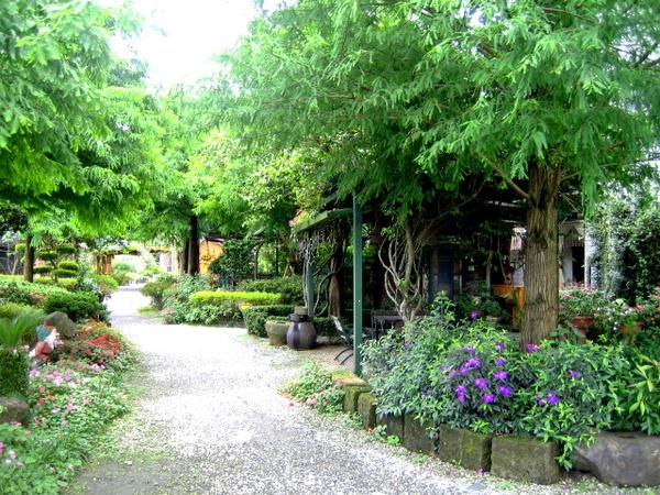 落羽松~是我們花園的主樹.jpg