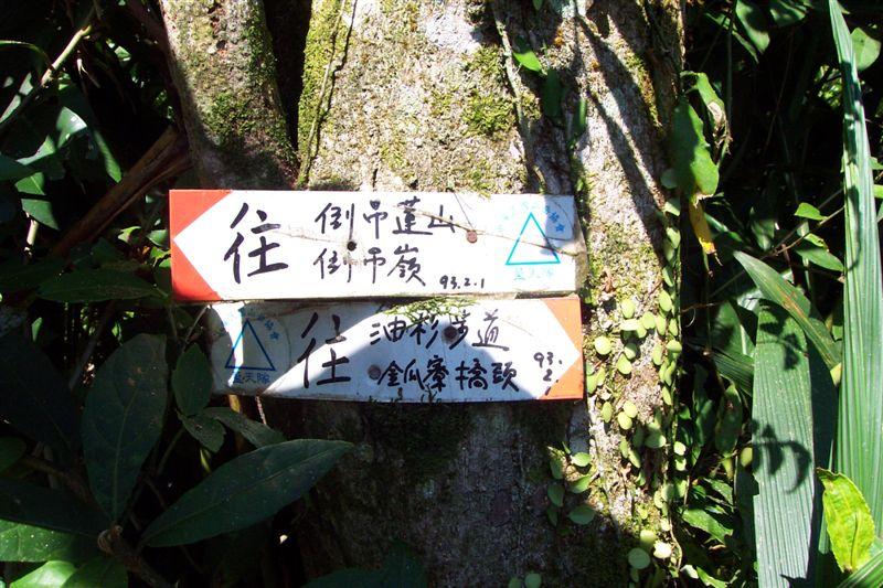 油杉林步道倒吊嶺山 024.jpg