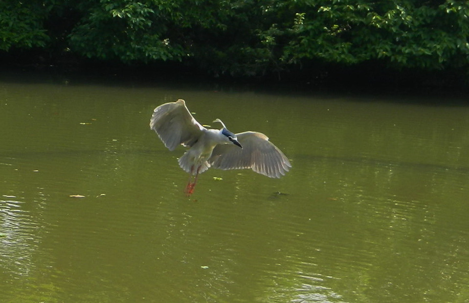 飛鳥-0013