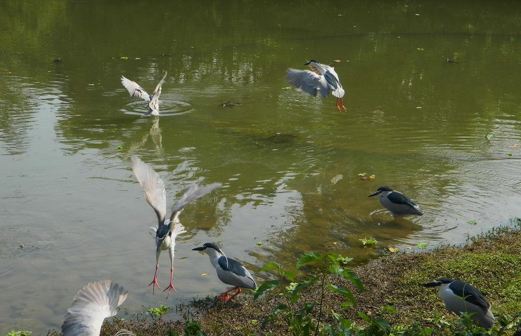 飛鳥-0015