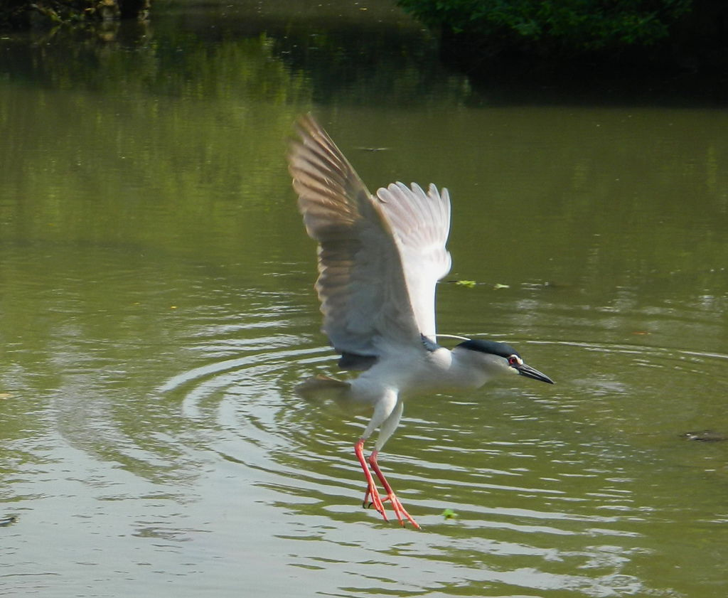 飛鳥-0016