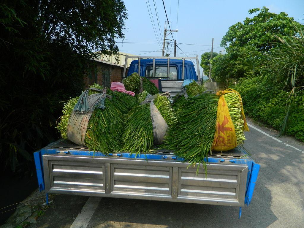 韭菜園-0002