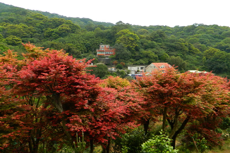 台北奧萬大楓紅-0020