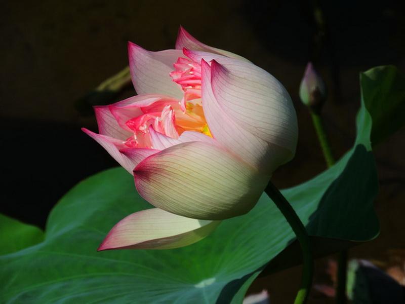 金山蓮花-0001