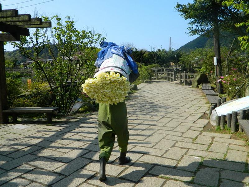海芋節-0008