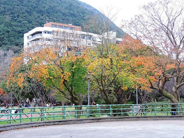 陽明山楓紅-0007