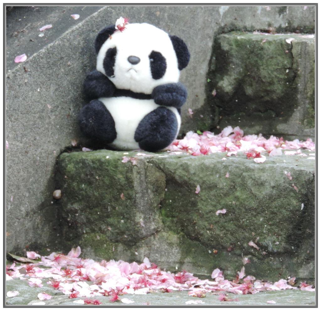 天元宮櫻花-0008