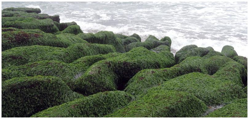老梅綠海岸-0015