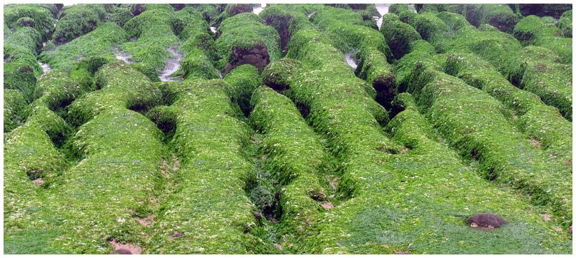 老梅綠海岸-0028