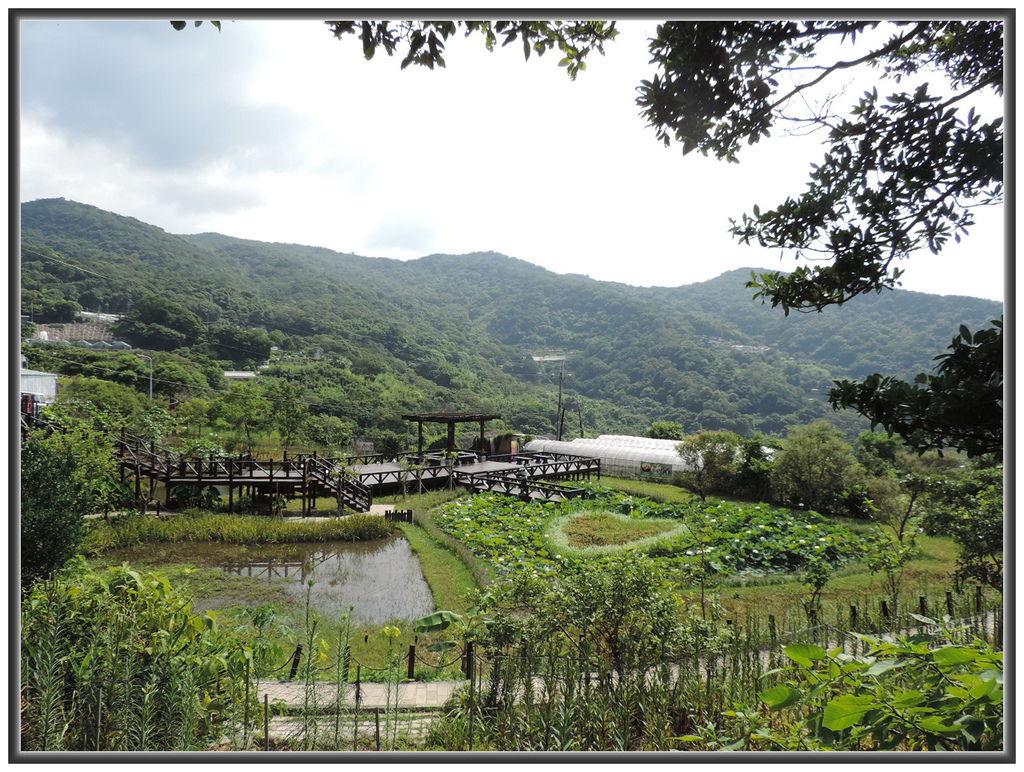 白石湖賞蓮--0017
