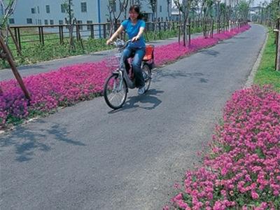 台中-東豐綠色走廊.jpg