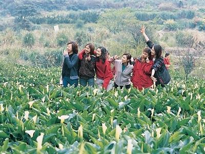 台北-竹子湖.jpg