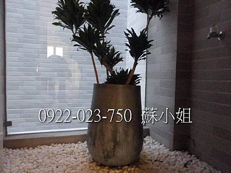 P1080444 (2)