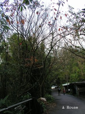 陽明山(2011.1)