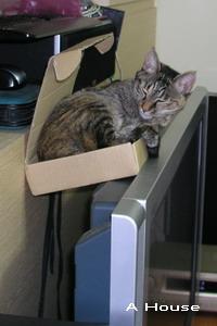 小芸睡小小的紙箱