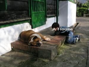 內灣警察局的胖狗