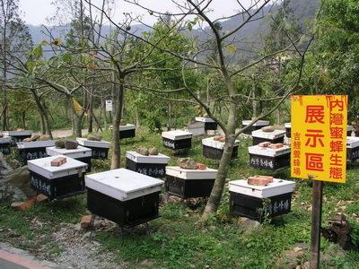 小蜜蜂的家2