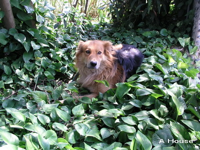 新竹動物園-看門狗