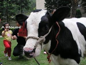 小牛到我家社區
