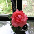 2008五月花季1