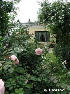 2008五月花季5