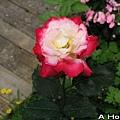 2008五月花季8
